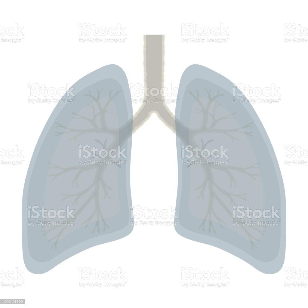 Human Lung Anatomy Illustration Illness Respiratory Cancer Gra Stock ...