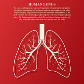 Human Lung anatomy illustration