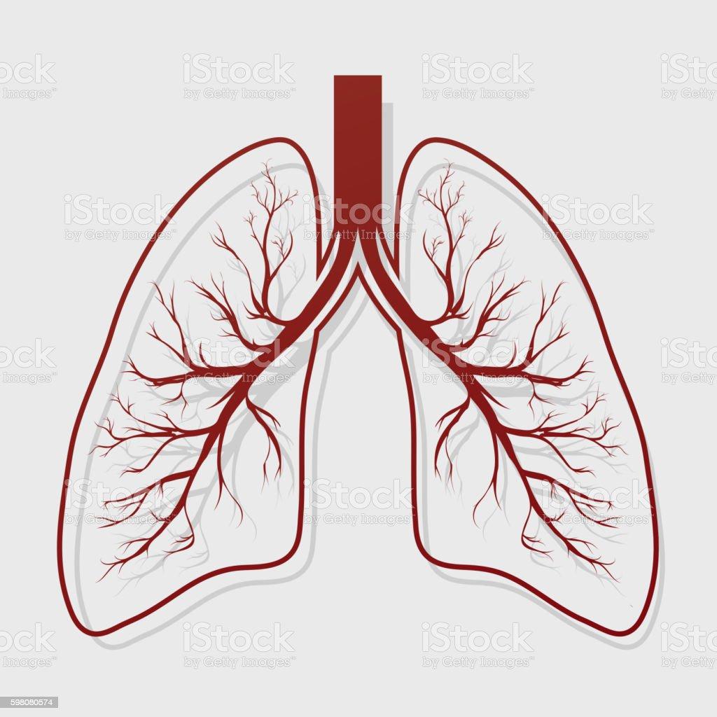 Menschliche Lunge Anatomieillustration Vektor Illustration 598080574 ...