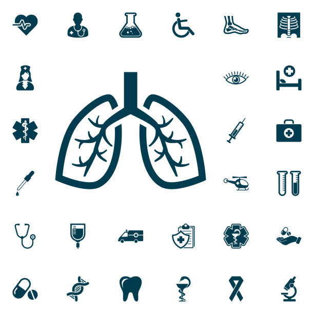 Human lung icon, medical set on white background. Health Care Vector illustration Human lung icon, medical set on white background. Health Care Vector illustration respiratory tract stock illustrations