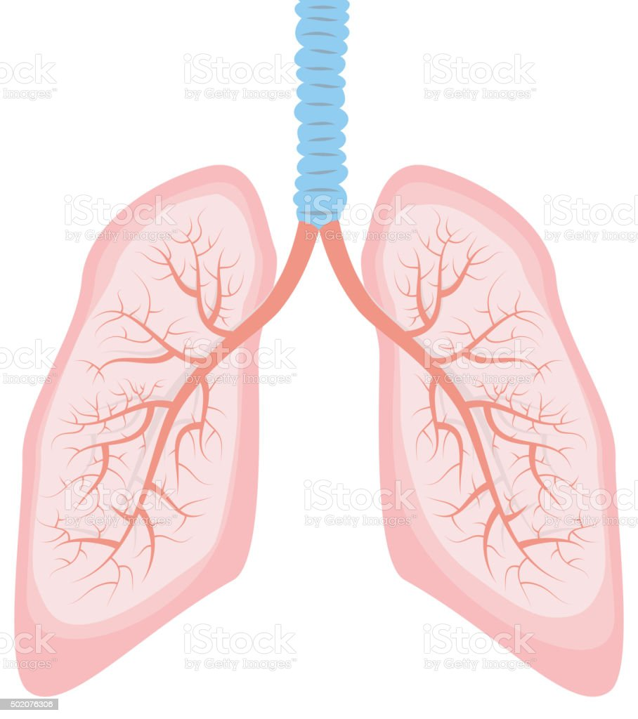Human Lung Illustration Stock Vector Art More Images Of 2015