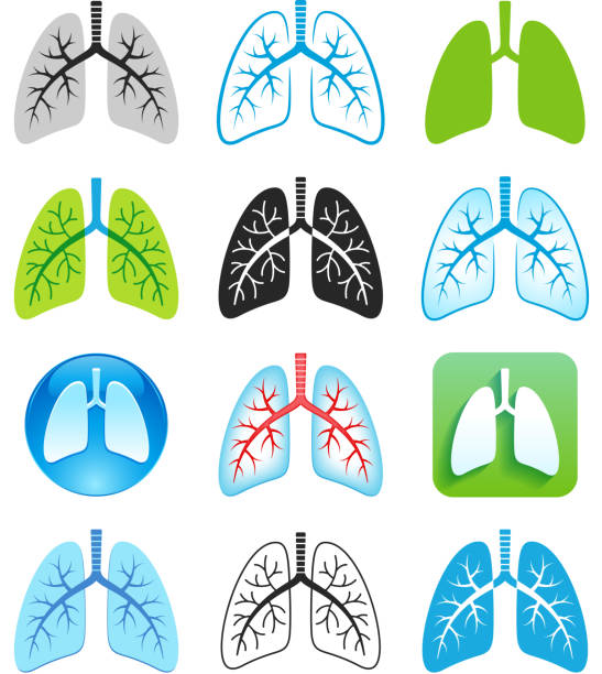 Human Lung Symbols Human Lung-respiratory system illustrations, symbols. EPS 10 file contains transparencies. File is layered, global colors used. lung stock illustrations