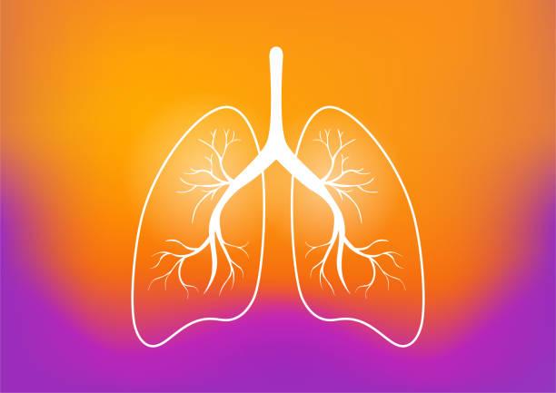 stockillustraties, clipart, cartoons en iconen met menselijke longen concept. - longen