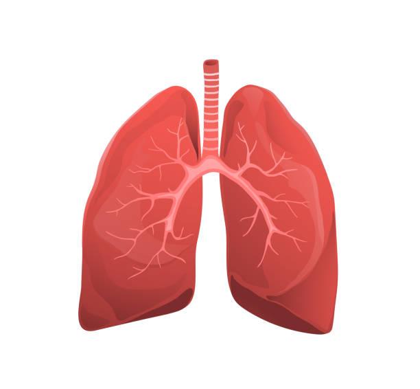 stockillustraties, clipart, cartoons en iconen met menselijke longen platte vector illustratie - longen