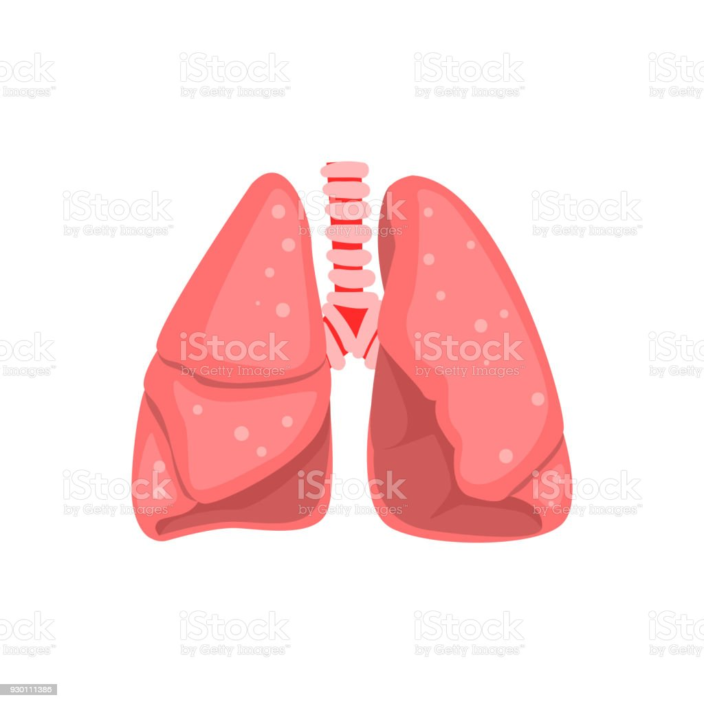 Human Lungs Internal Organ Anatomy Vector Illustration On A White