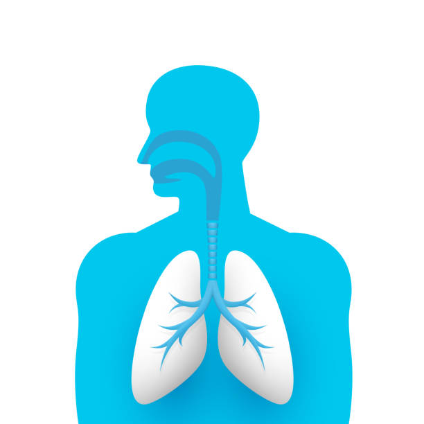 Human lungs medical art creative Human lungs medical art creative. Vector illustration respiratory system stock illustrations