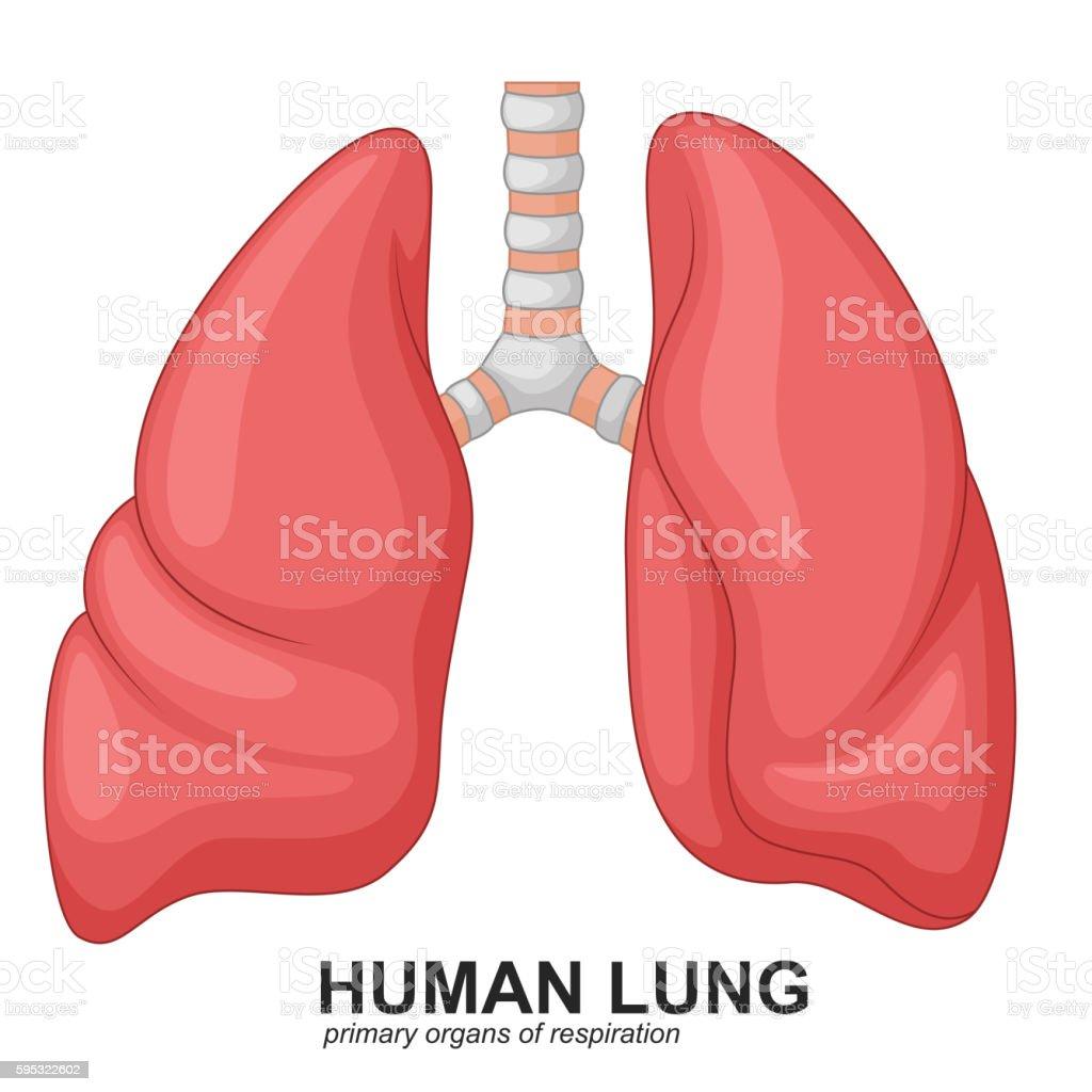 Menschliche Lunge Atemwegs Comic Stock Vektor Art und mehr Bilder ...