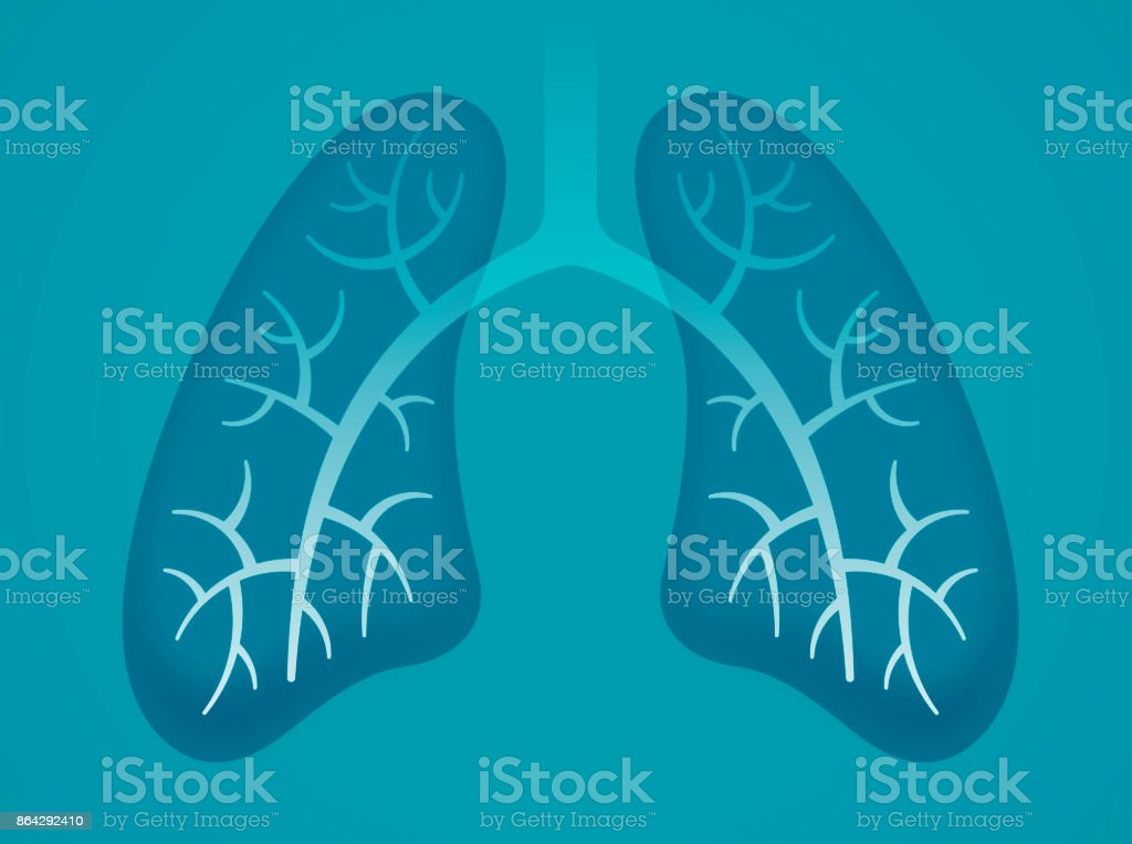 Human Lungs vector art illustration