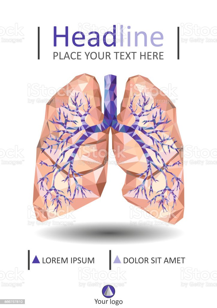 Human Lungs With Trachea Bronchus Bronchi Carina In Low Poly Cover ...