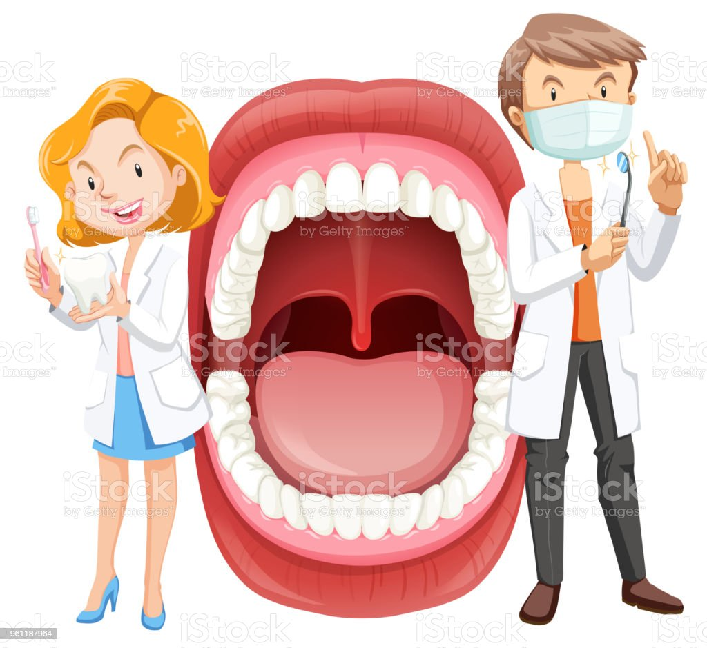 Human Mouth Anatomy With Dentist Stock Vector Art & More Images of ...