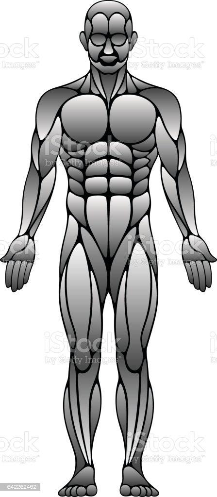 Human muscles vector art illustration