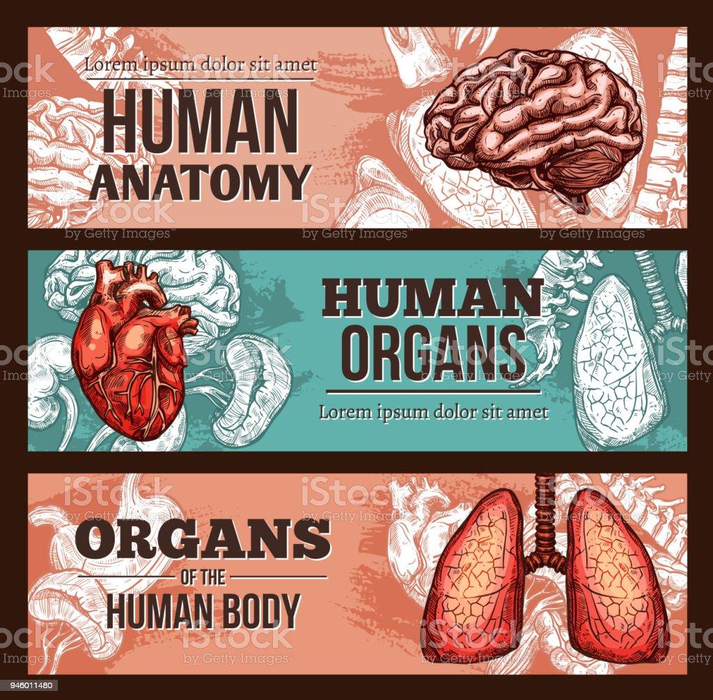 Organ Des Menschenanatomie Skizzieren Banner Mit Körperteilen Stock ...