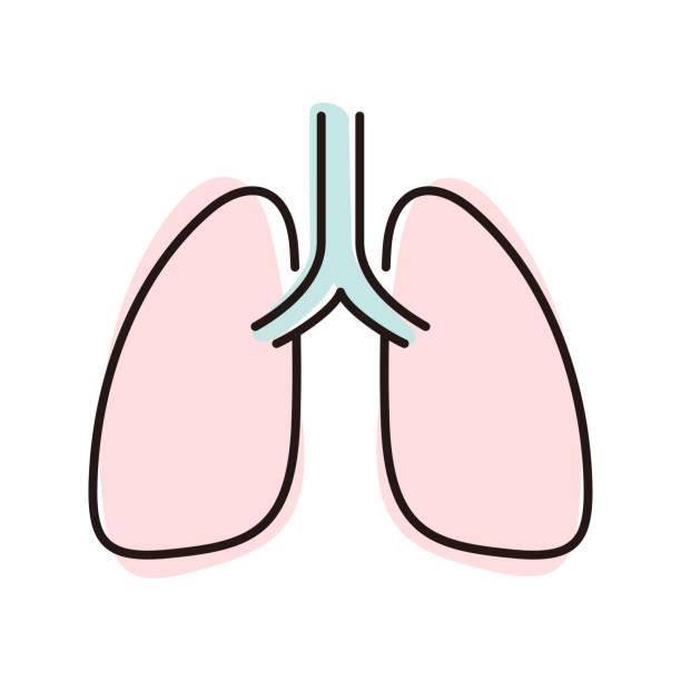 stockillustraties, clipart, cartoons en iconen met menselijke orgel longen platte icoon, vector illustratie - longen