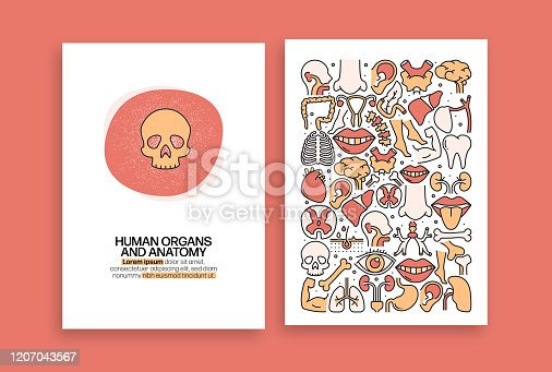 Human Organs and Anatomy Industry Related Design. Modern Vector Templates for Brochure, Cover, Flyer and Annual Report.