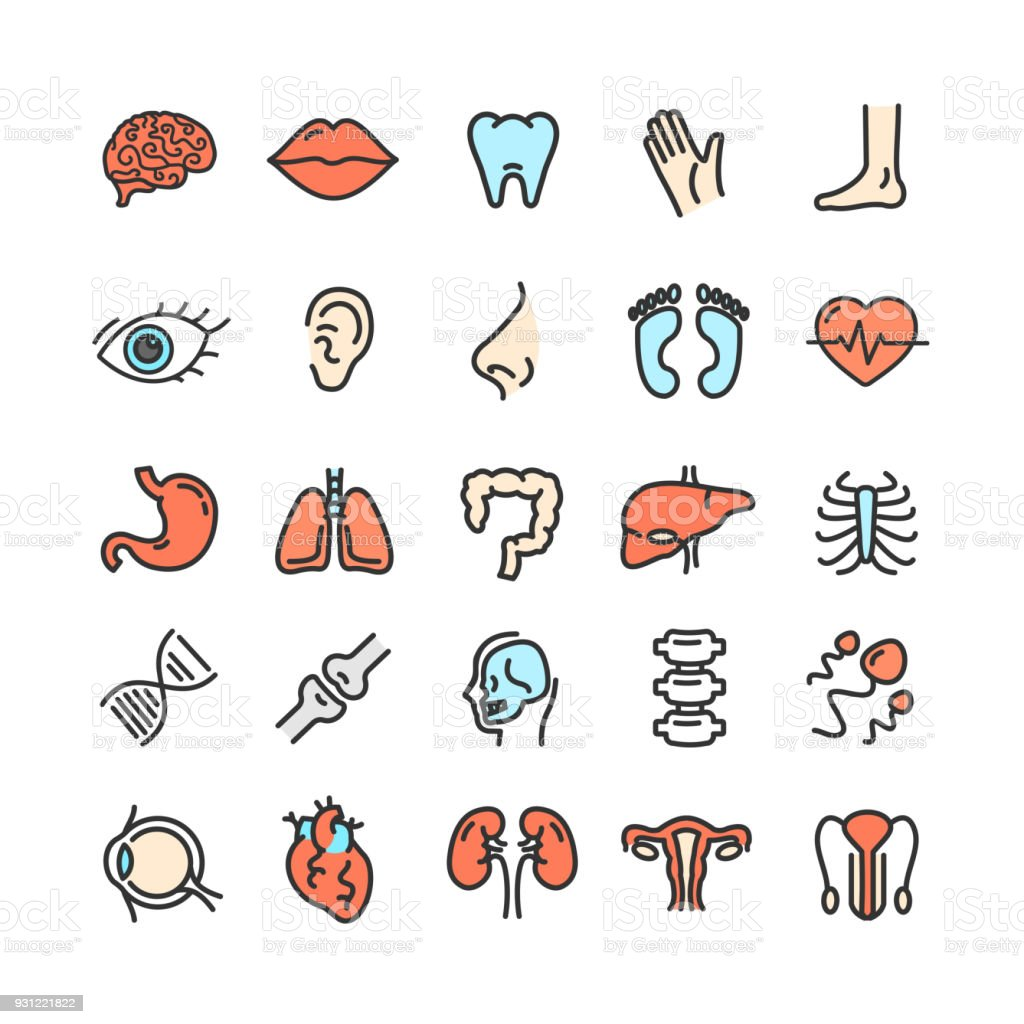 Human Organs Color Thin Line Icon Set Vector Stock Vector Art More