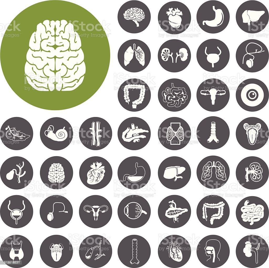 Menschliche Organe flachen design-Ikonen-set.  Illustration eps10 – Vektorgrafik