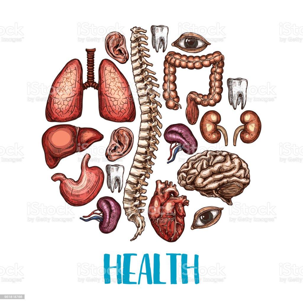 Menschlichen Organen Gesundheit Vektor Skizze Plakat Stock Vektor ...