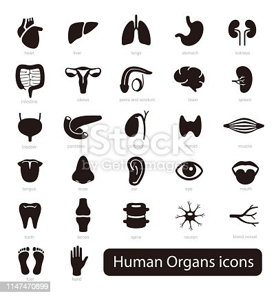 Human Organs icon set, vector illustration