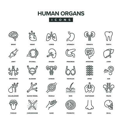 Human Organs Line Icon Set
