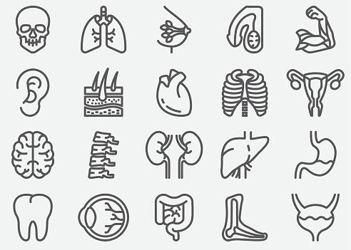 Human Organs Line Icons