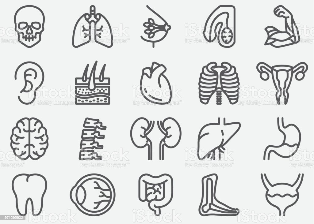 Human Organs Line Icons vector art illustration