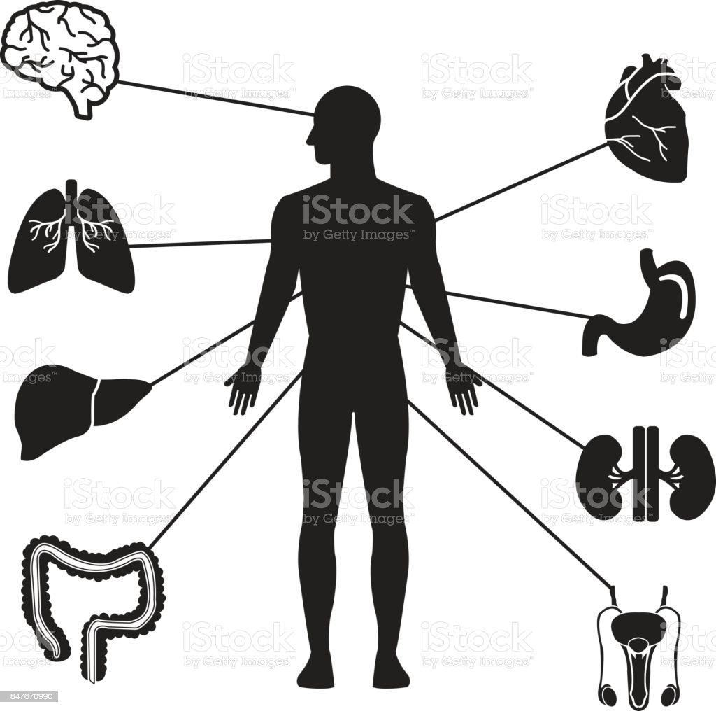 Menschlichen Organen Männliche Silhouette Vektor Iconset Gehirn Herz ...