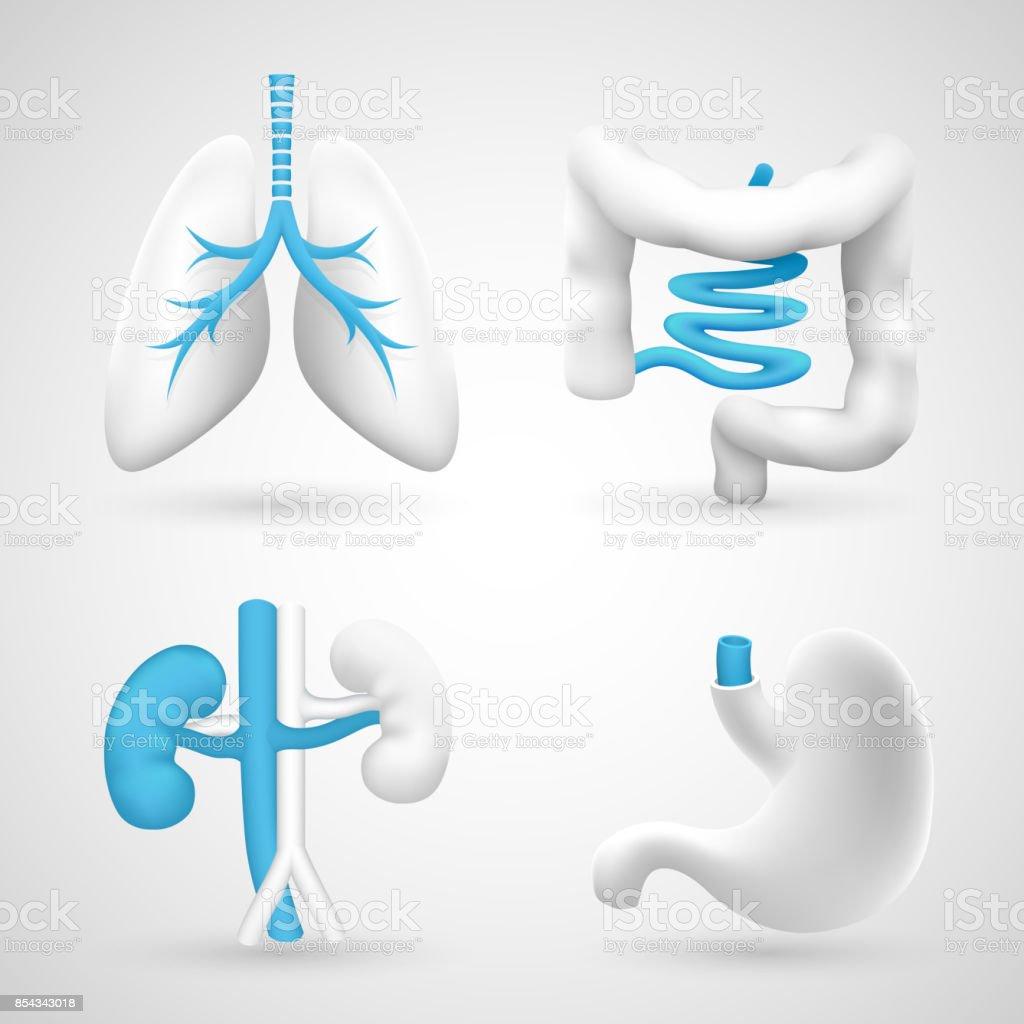 Menschliche Organe Auf Einem Weißen Hintergrund Grau Objekte Stock ...