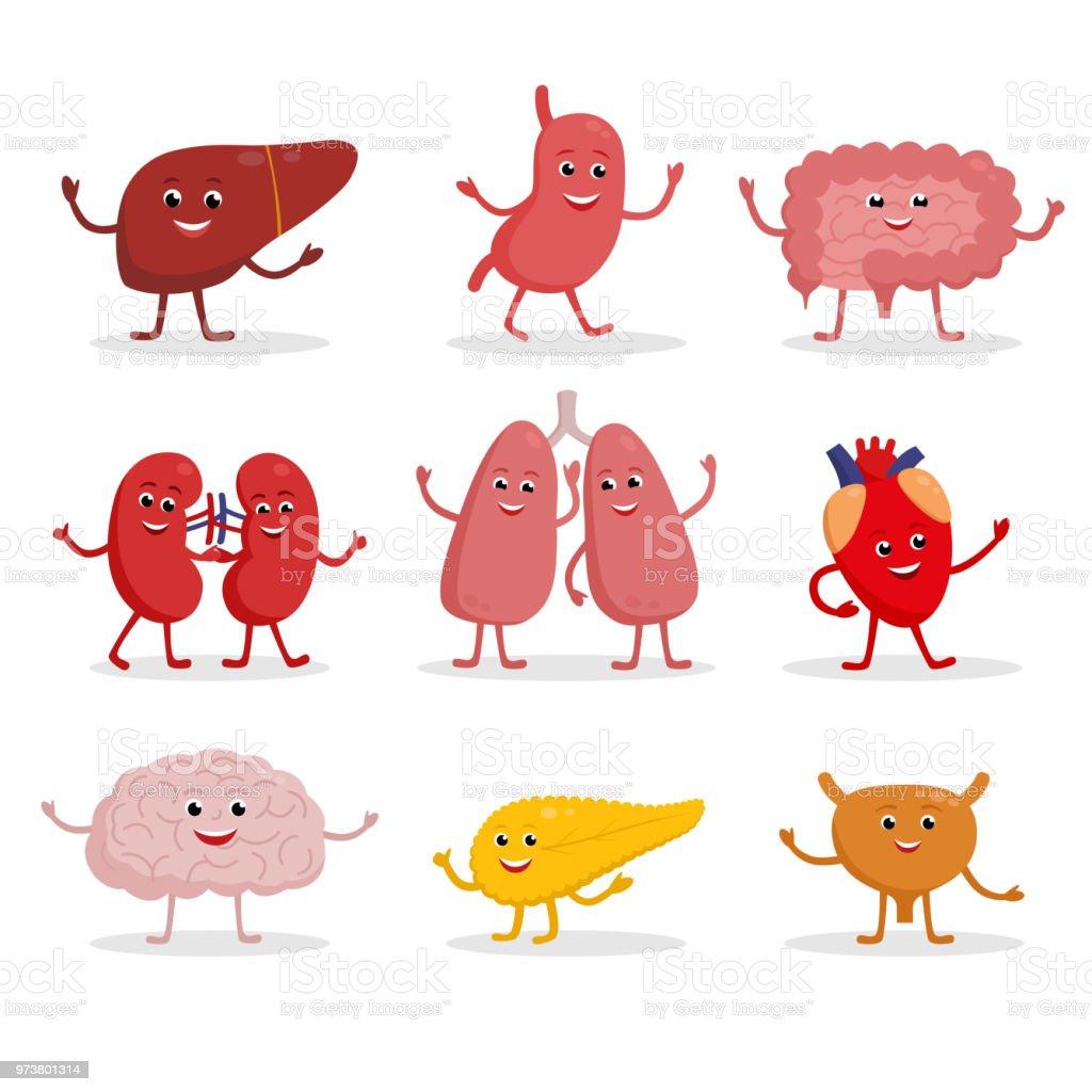 人間の臓器ベクトル漫画文字イラストでフラットなデザインかわいい笑顔白