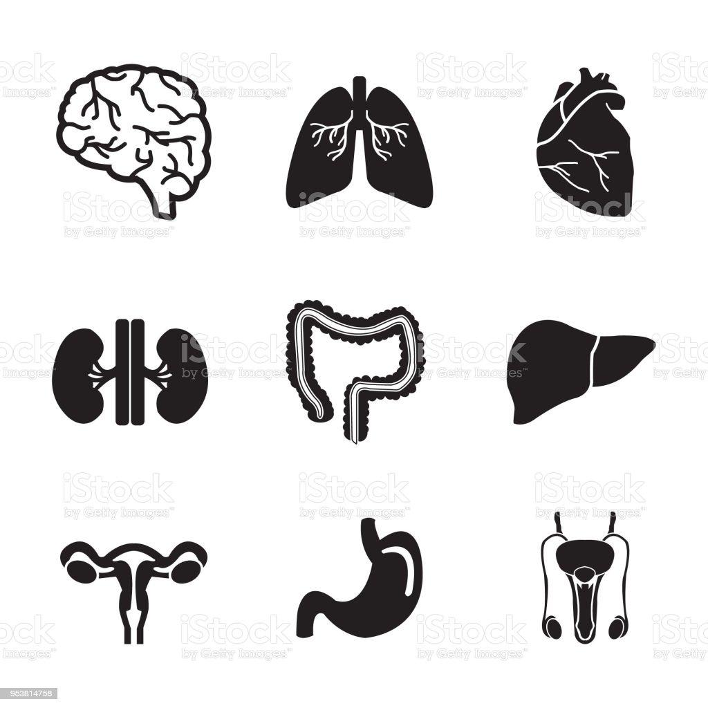 Menschliche Organe Vektor Iconset Gehirn Herz Lunge Leber Magen ...