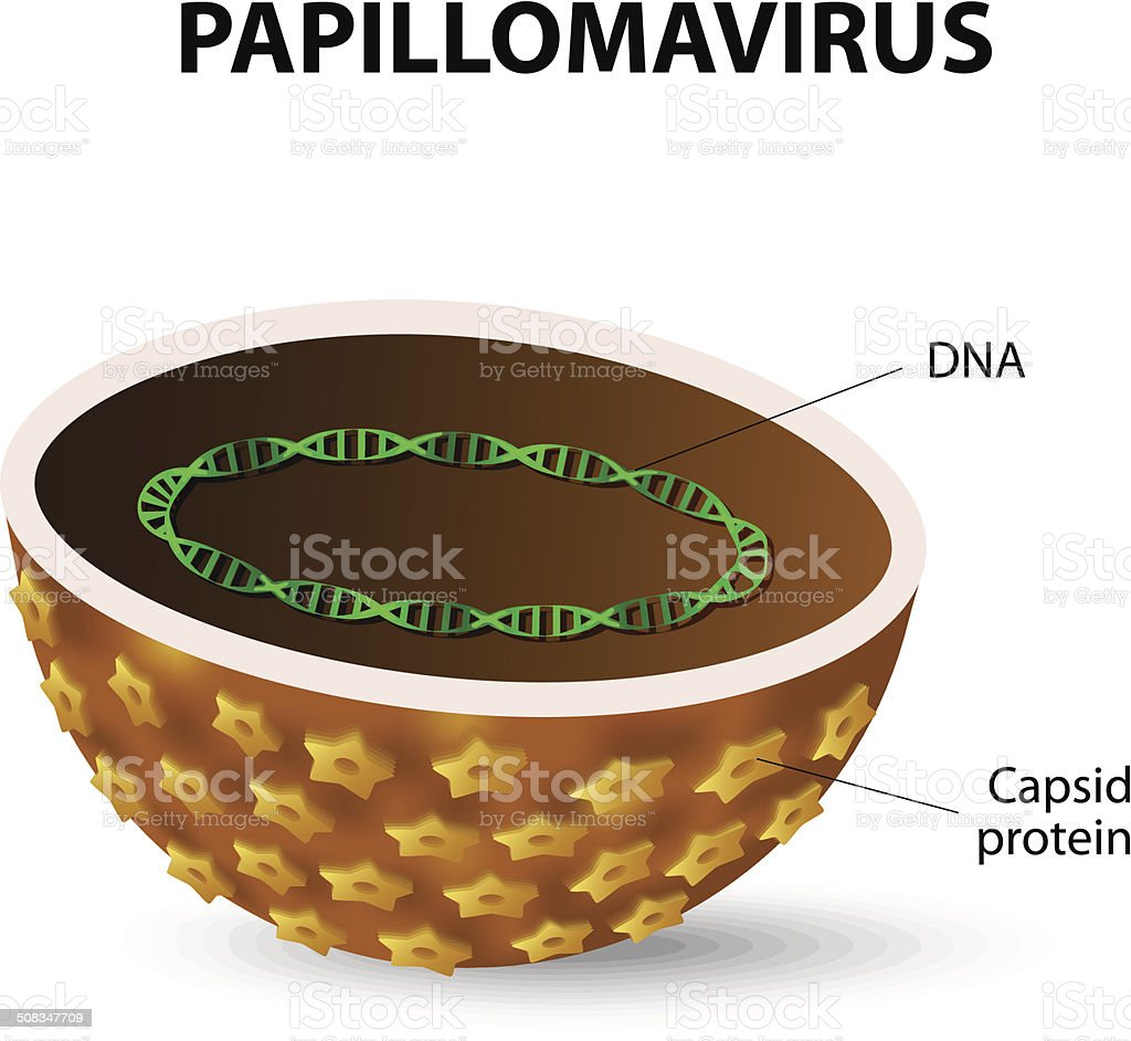Human papilloma virus. HPV royalty-free stock vector art