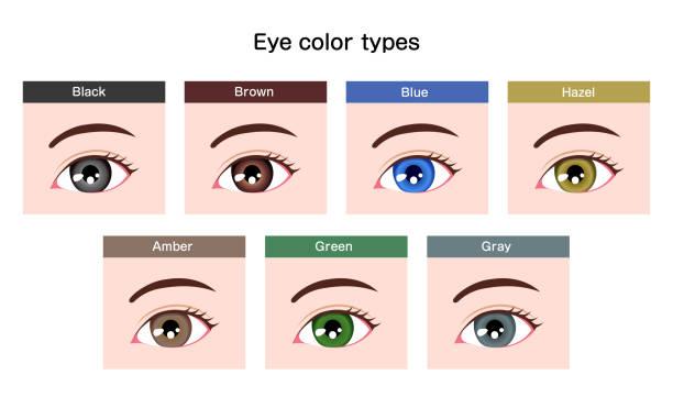 ilustraciones, imágenes clip art, dibujos animados e iconos de stock de variaciones de globo ocular de pupila humana / ilustración de tipos de color de ojos - ojos azules