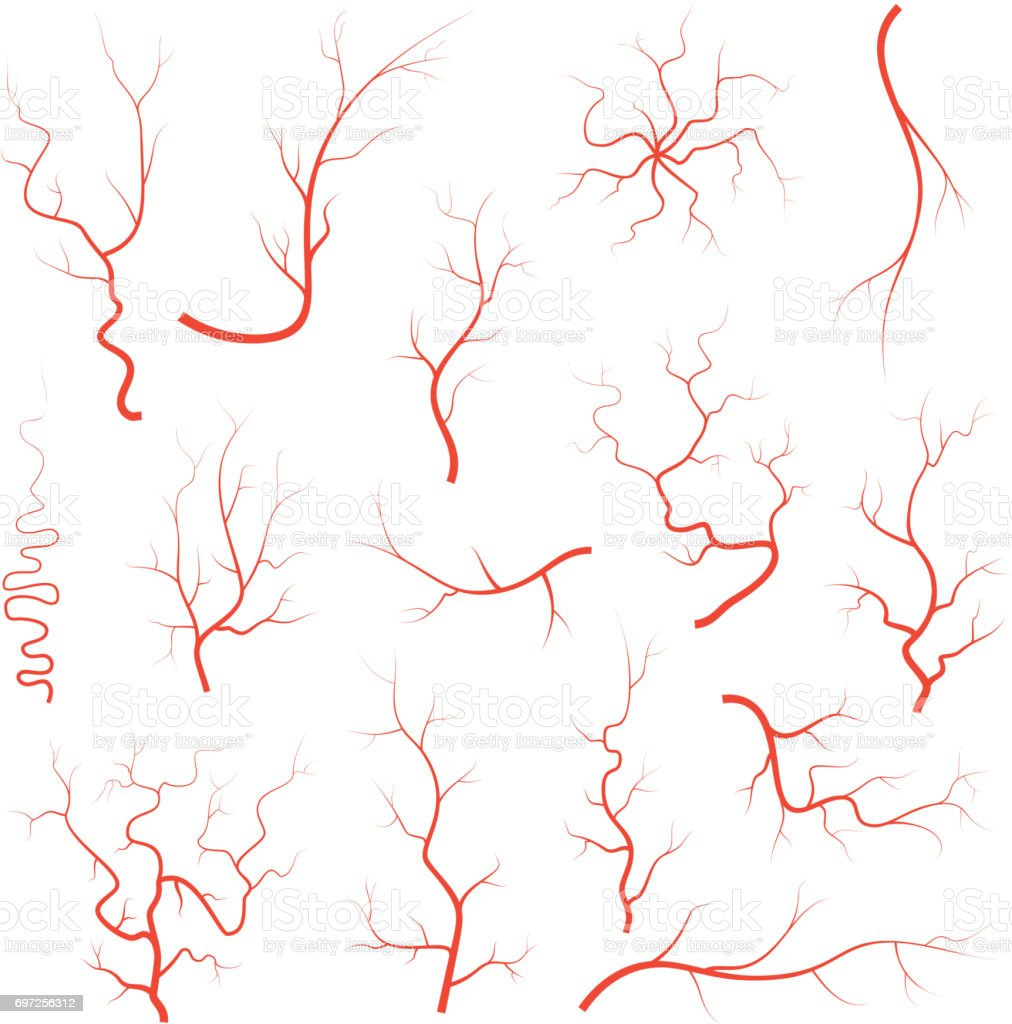 Human red eye veins set, anatomy blood vessel arteries illustration group. Vector medical eyeball vein arteries system map. Veins isolated on white background vector art illustration