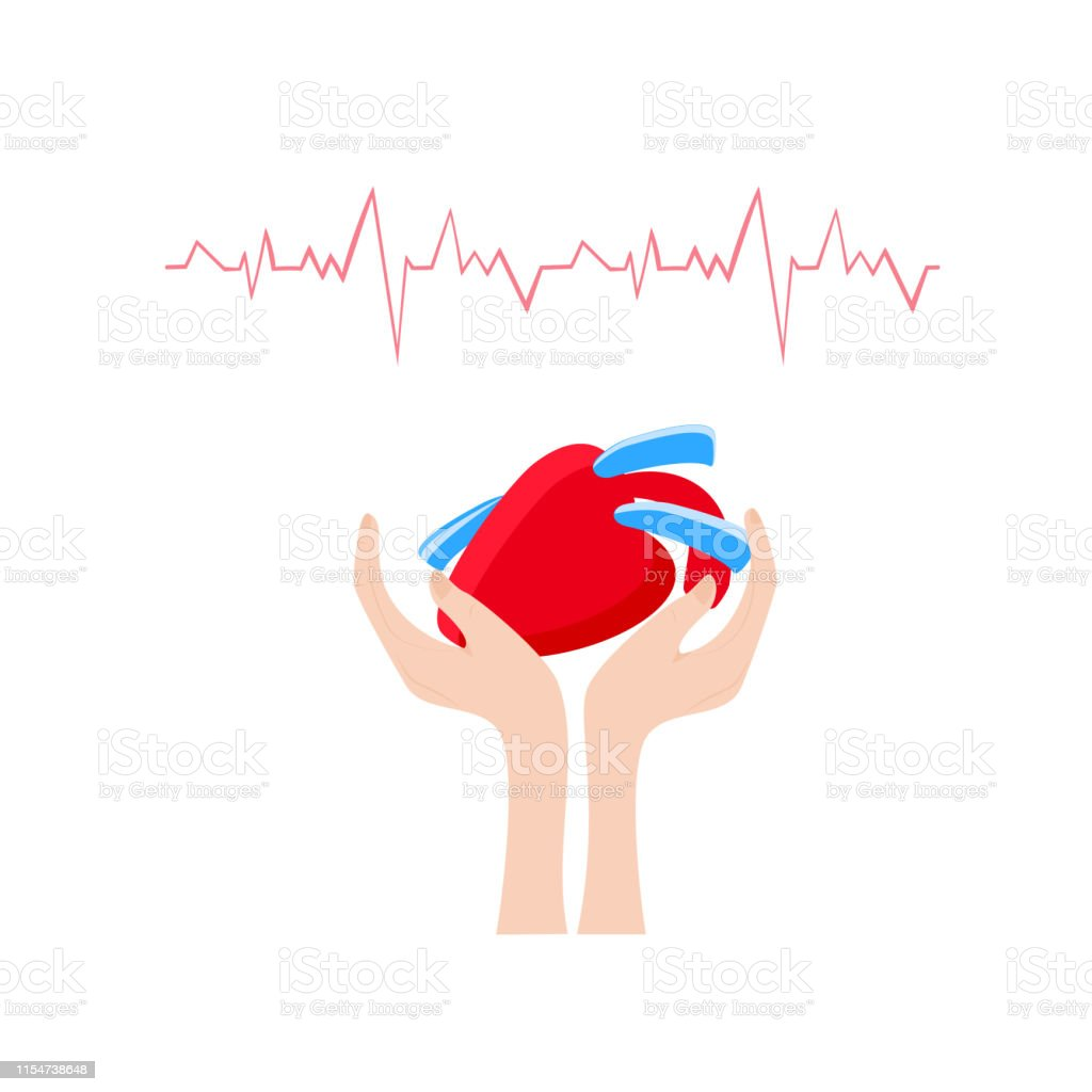 human red heart in the hands. heart day. vector illustration on white...