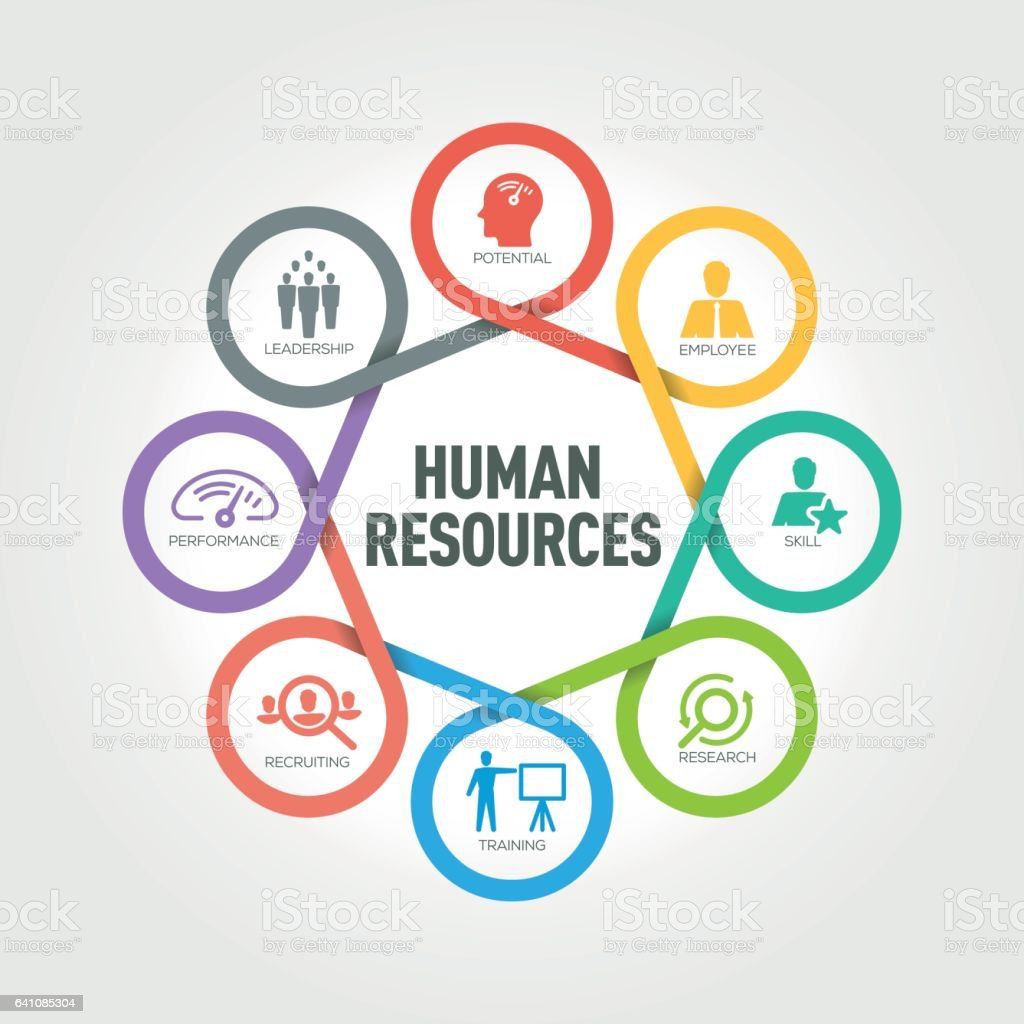 Human Resources infographic with 8 steps, parts, options vector art illustration