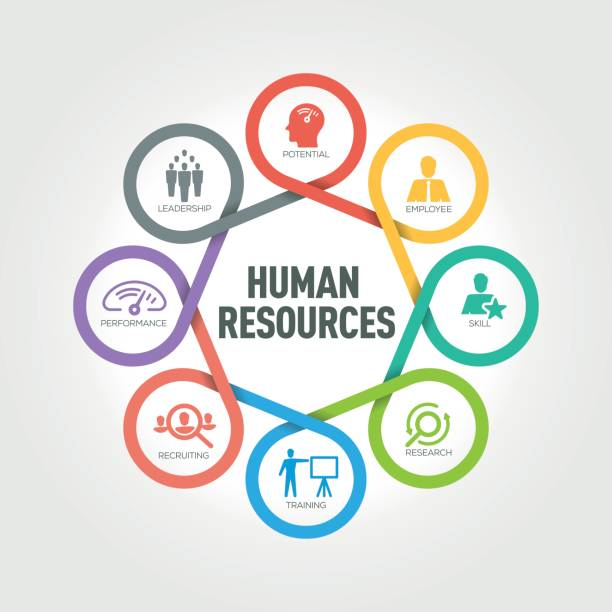 illustrazioni stock, clip art, cartoni animati e icone di tendenza di human resources infographic with 8 steps, parts, options - reparto assunzioni