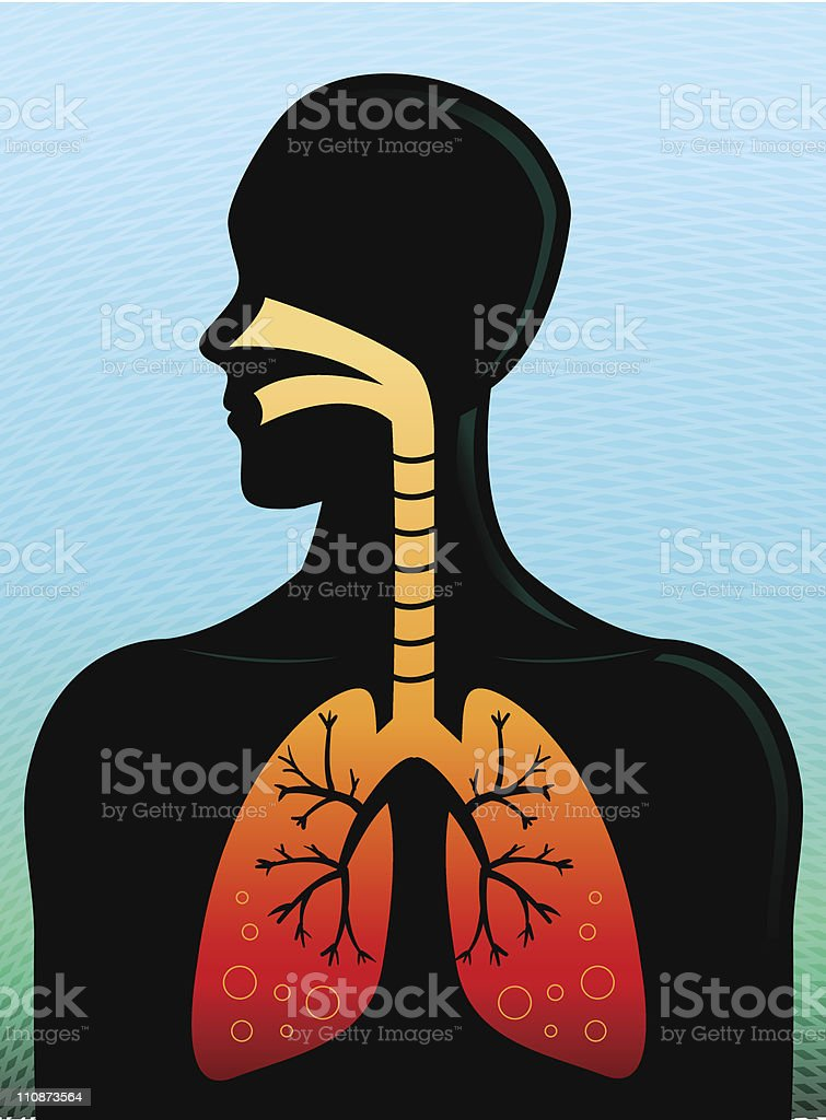 Human Respiratory System royalty-free human respiratory system stock vector art & more images of adult