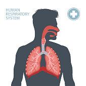 istock Human respiratory system 1216976987