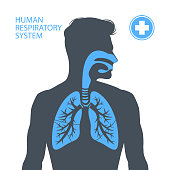 istock Human respiratory system 1225775779