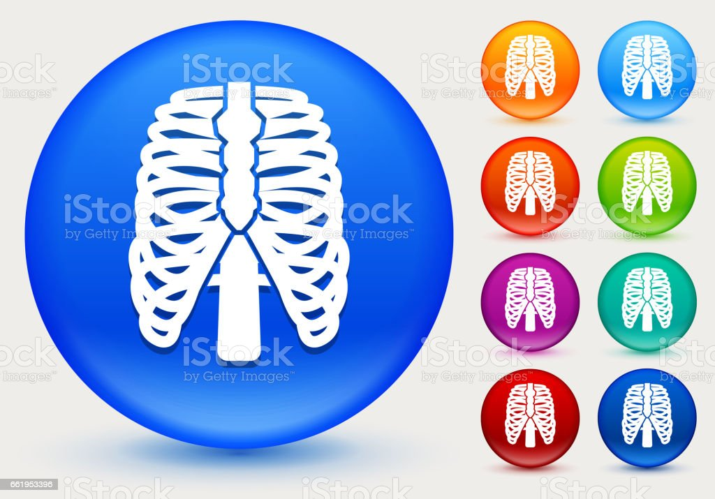 Human Ribs Icon on Shiny Color Circle Buttons royalty-free human ribs icon on shiny color circle buttons stock vector art & more images of circle