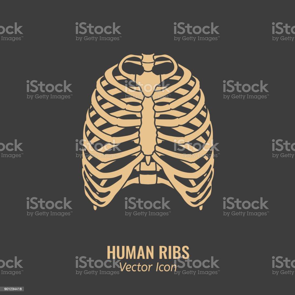 Menschliche Rippensymbol Stock Vektor Art und mehr Bilder von ...