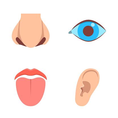 Sense organ icons set in flat style. Human perception elements - vision, hearing, taste, smell. Vector illustration.