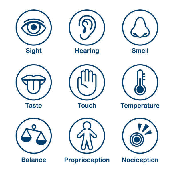 Human senses icon set vector art illustration