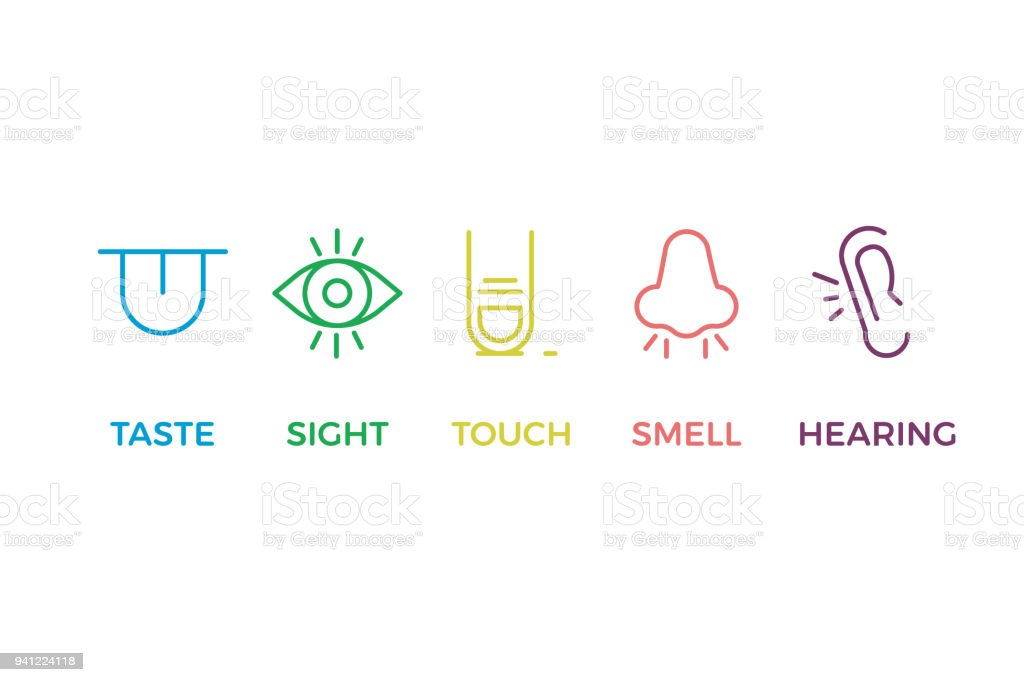 5 human senses illustrations. Taste, sight, touch, smell, hearing. Tongue, eye, finger, nose and ear. Vector trendy thin line icon pictogram designs in different colors vector art illustration