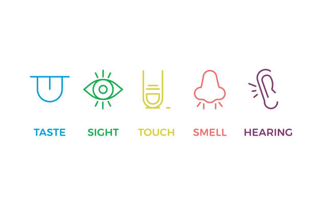 5 human senses illustrations. taste, sight, touch, smell, hearing. tongue, eye, finger, nose and ear. vector trendy thin line icon pictogram designs in different colors - patrzeć stock illustrations