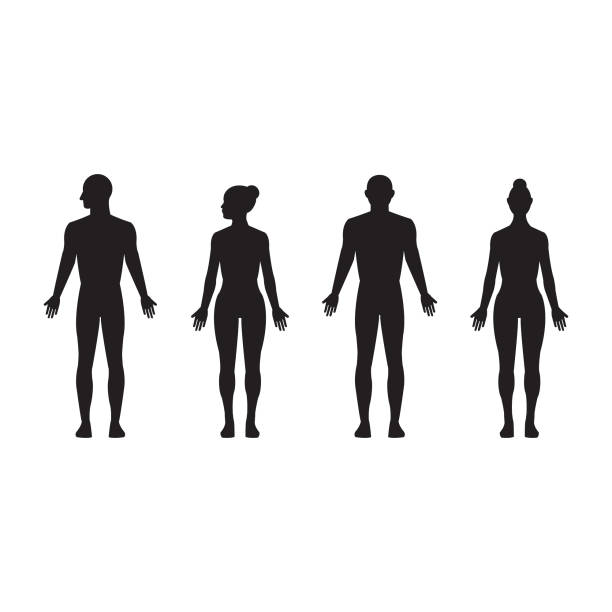 Human silhouette male and female, man and woman realistic black isolated vector icon set Realistic vector illustration of human male and female silhouettes the human body stock illustrations