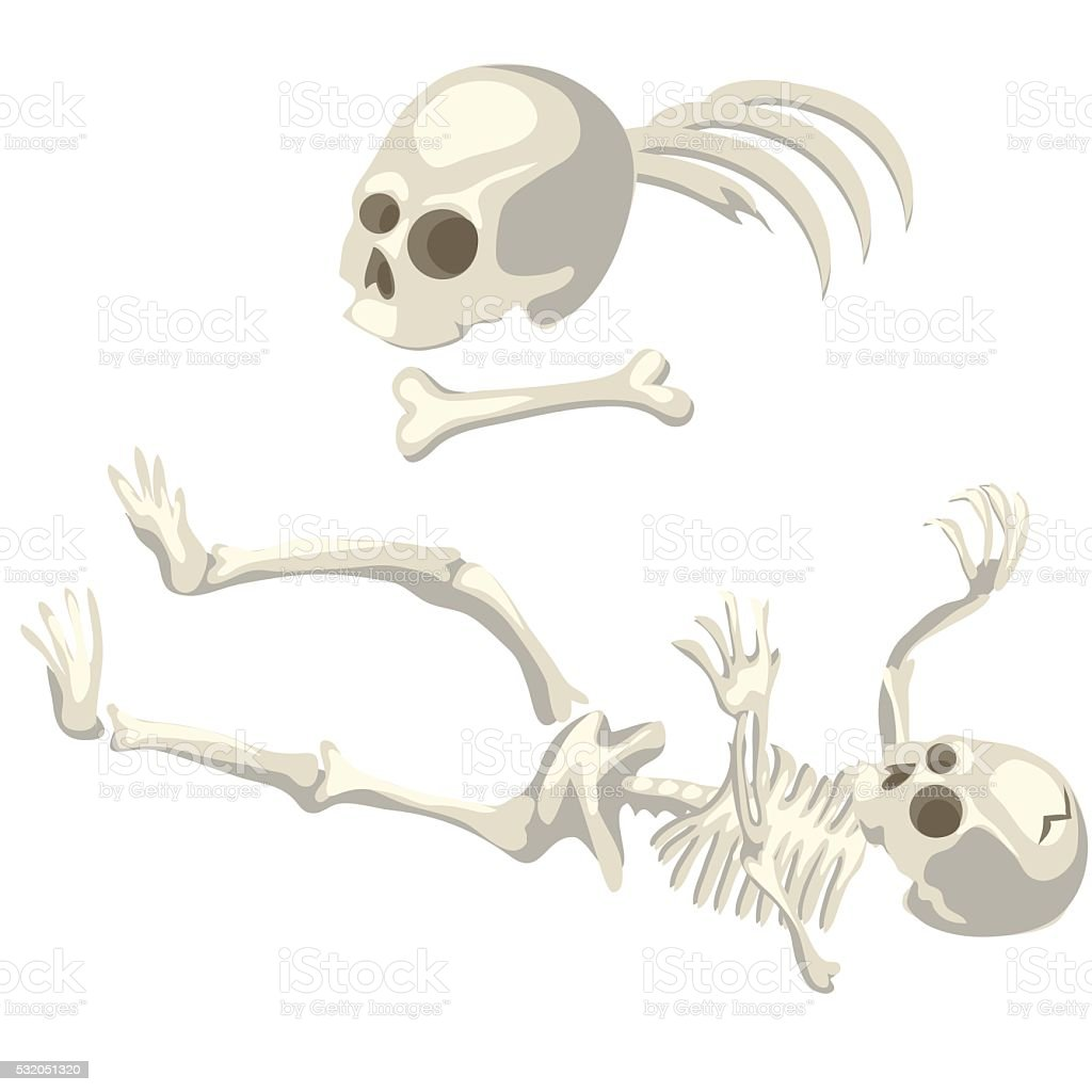 Human Skeleton And Bones Different Parts Of Body Stock Vector Art ...
