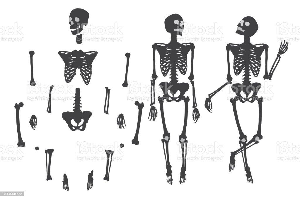 Ilustración de Esqueleto Humano Negro Sobre Blanco Set Bricolaje Con ...