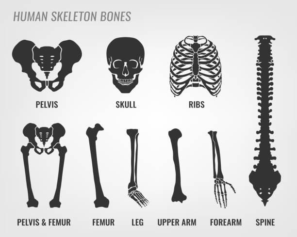 人間の骨格の骨 - 骨点のイラスト素材/クリップアート素材/マンガ素材/アイコン素材