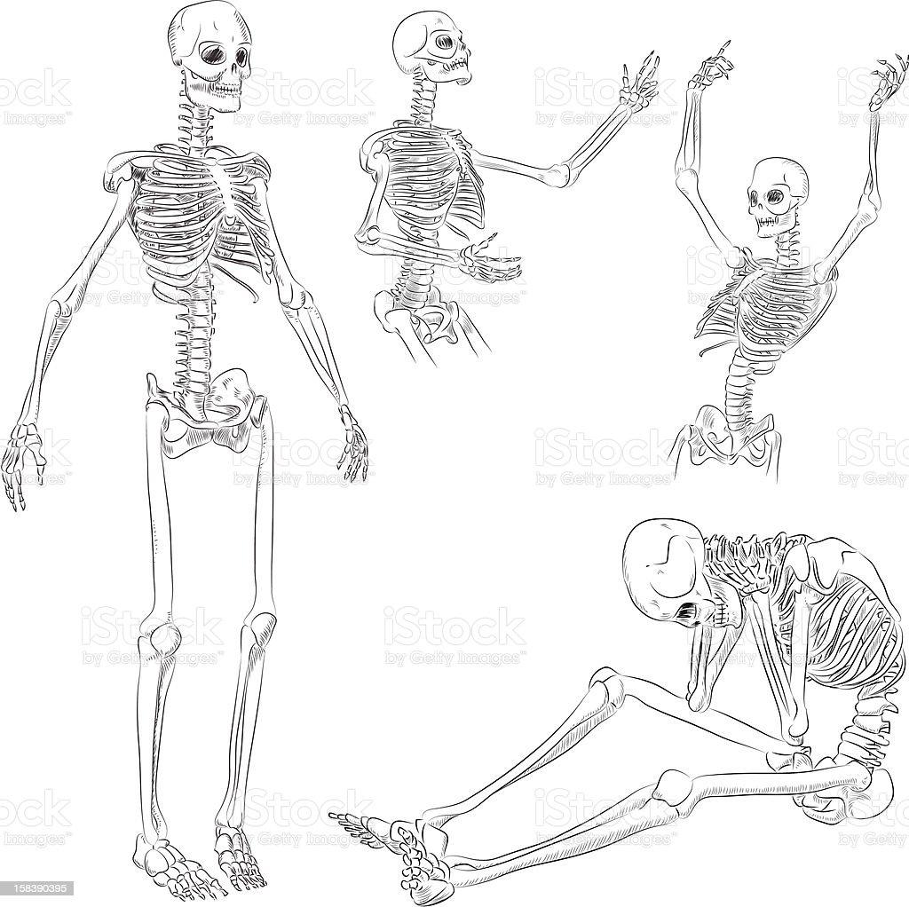 Ilustración de Esqueleto Humano Dibujo y más banco de imágenes de ...