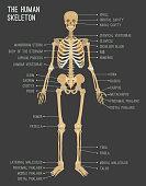 Human skeleton image